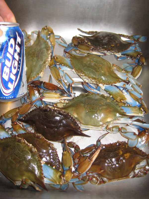 dc-blue-crabs-i.JPG