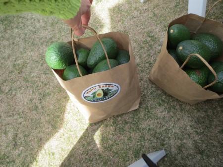 Avocados 035