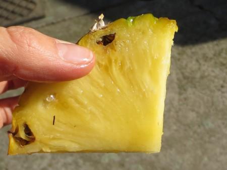 Pineapple 074