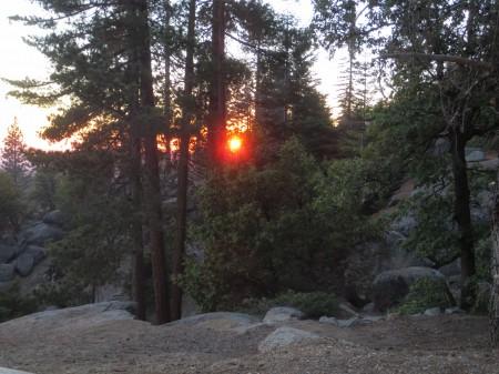 Sequoia 055