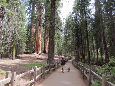 Sequoia 073