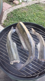 Trout on Smoker