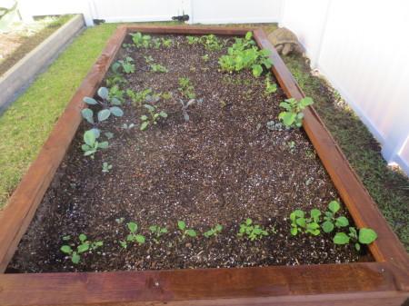 Garden Status